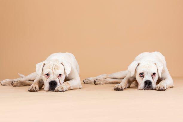 Sterbebegleitung beim Hund