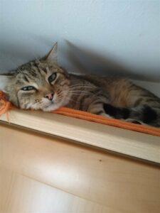 Tierheilpraktikerin Katze Bernkastel Wittlich
