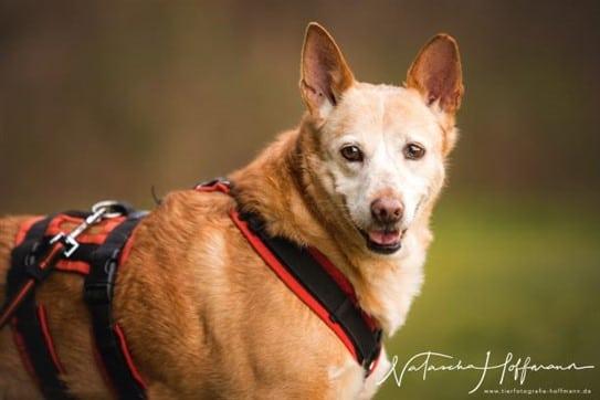 Tierheilpraktikerin Hund Wittlich Bernkastel Trier Luxemburg