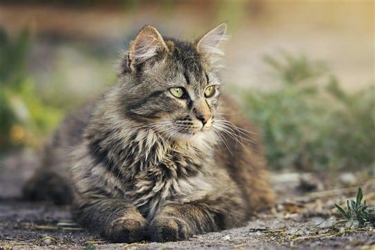 Katzen | Symptome | Schmerzen | Juckreiz | Wittlich Bernkastel-Kues Trier