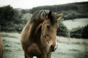 Tierheilpraktikerin Pferd Wittlich