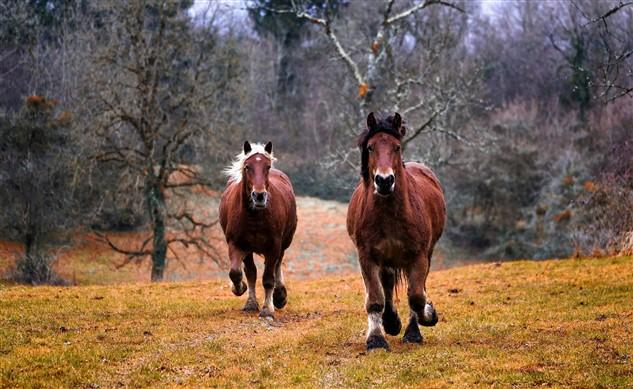 häufige Pferdekrankheiten Symptome Naturheilkunde nutzen
