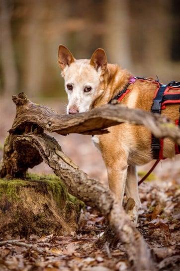 Hund sieht über Ast