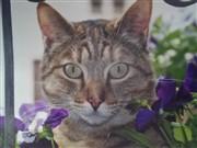 Katzen zwischen Blumen